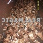 Agro-Mushroom-2