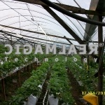 CH Strawberry AGRO