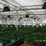 Strawberry AGRO-2